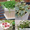 季節のお花またはミニ観葉植物5株セット 送料無料