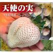 【送料無料】まもなく終了!佐賀県産「井手農園」の超大粒白いちご『天使の実』  9〜12粒入(約1kg)