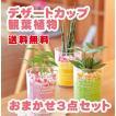 デザートカップ 観葉植物 3種類セット