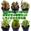 一つ選べる多肉植物4種類セット