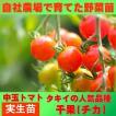 トマト 小玉 千果 9cmポット 実生苗