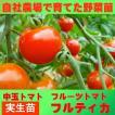 トマト 中玉 フルティカ 9cmポット 実生苗