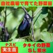 水ナス SL紫水 9cmポット 実生苗