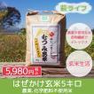 農薬不使用 はぜかけ玄米5キロ コシヒカリ