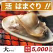 桑名 蓄養 はまぐり 大サイズ(600g)【送料無料】中国産 約60g-80gの貝(約9粒前後) はまぐりの 丸元水産 養殖 直送 焼きハマグリ 浜焼き お吸い物 お食い初め