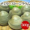 チェリーストーンクラム(ホンビノス貝)(500g) はまぐり屋 活はまぐり 国産はまぐり 地はまぐり 白はまぐり 活き蛤 地蛤 BBQ バーベキュー