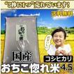 米 コシヒカリ お米 4.5kg 白米 平成30年産 送料無料 国産 セール おちこ惚れ米