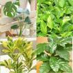 全ておまかせ 観葉植物 9鉢セット