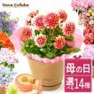 母の日 ギフト 2019 mothersday フラワーギフト 鉢植え 花 お菓子