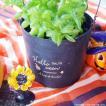 ハロウィン ガーデン雑貨 鉢カバー 木製 チアーパンプキンバケット
