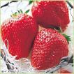 苺(イチゴ) アイベリーの苗