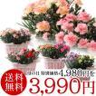 20%OFF カーネーション おまかせ2鉢寄せ植え 母の日 贈り物 記念日【送料無料】【お届けは5月1日〜5月11日となります。】