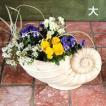 貝型鉢 アンモナイト フラワーベース大(3415)