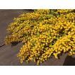 ミモザのドライフラワー花束