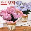 母の日 ギフト 花 選べるアジサイ5号 鉢植え~20品...