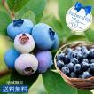 父の日 ギフト プレゼント ブルーベリー 成木 系7号 鉢植え 実付き 果樹 果物 夏のギフト お中元ギフト 誕生日プレゼント