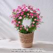 母の日 ギフト 花鉢 バラ 「夢乙女」 日比谷花壇