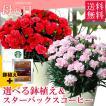 母の日 ギフト 2019 選べる鉢植え&スターバックス / お花 カーネーション  鉢花