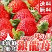 母の日ギフト フルーツ 北海道産 銀龍苺 さがほのか 1シート カーネーション付 / 苺 イチゴ いちご 果物 花 メッセージカード
