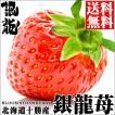 母の日 ギフト 贈り物 フルーツ 北海道産 銀龍苺「さがほのか」(2シート) / 送料無料 いちご イチゴ 産地直送 十勝 フルーツ 果物