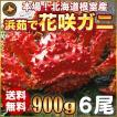 敬老の日 ギフト 2017 花咲ガニ 900g × 6尾 希少な 花咲ガニ 北海道産 蟹