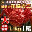 敬老の日 ギフト 2017 花咲蟹 1.1kg × 1尾 希少な 花咲蟹 北海道産 蟹