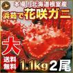 敬老の日 ギフト 2017 花咲蟹 1.1kg × 2尾 希少な 花咲蟹 北海道産 蟹