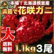 敬老の日 ギフト 2017 花咲蟹 1.1kg × 3尾 希少な 花咲蟹 北海道産 蟹