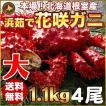 敬老の日 ギフト 2017 花咲蟹 1.1kg × 4尾 希少な 花咲蟹 北海道産 蟹