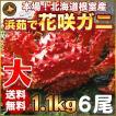敬老の日 ギフト 2017 花咲蟹 1.1kg × 6尾 希少な 花咲蟹 北海道産 蟹