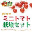 藤田智先生監修 ミニトマト用 栽培セット 苗はついておりません