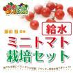 送料無料 藤田智先生監修 ミニトマト用 給水プランター栽培セット
