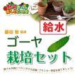 藤田智先生監修 ゴーヤ栽培セット 給水プランター 苗はついておりません