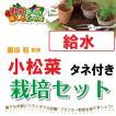 藤田智先生監修 種から栽培セット 給水プランター コマツナのタネつき