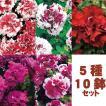 【10鉢セット】変わり咲きペチュニア5種類×2苗セット...
