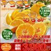 送料無料 はるみ デコポン 食べ比べ セット 春の2大 柑橘 合計 4kg