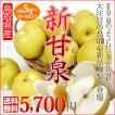 新甘泉 しんかんせん 5kg 梨の新品種 二十世紀梨で知られる鳥取の 新しい 和梨 送料無料