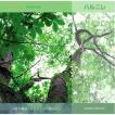 ハルニレ 〜水の風景-スピッツの森から〜 知浦伸司