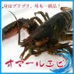 中サイズ 2-3人前 活オマールエビ 1尾400-500g エビ えび 海老 蝦 バーベキュー・フレンチ