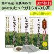 ヒュウガトウキ  ノンカフェイン 日本山人参 ティーパック 神の草 健康茶 無農薬 美味しく飲みやすい健康茶!