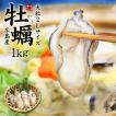 牡蠣 カキ 広島産牡蠣1kg 特大2Lサイズ 《ref-kk1》yd5[[牡蠣1kg]