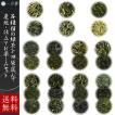 日本茶 選べる茶葉 4袋 (100g×3+60〜70g) 静岡 八女 鹿児島 知覧  嬉野 掛川 菊川 牧之原 煎茶 茎茶 深蒸し かぶせ 品種限定