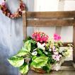 季節の寄せかご 季節の寄せ鉢 季節のお花でお任せ寄せカゴ Sサイズ 送料無料