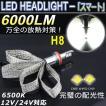 新商品 LEDヘッドライト H8 ファンレスリボン CREE-XHP50 6000LM/6500K 抜群の明るさ 12V/24V対応 18ヶ月保証