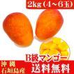 石垣島産完熟アップルマンゴーB級品 2kg(4〜8玉) 2017年産