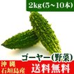 石垣島産ゴーヤ(苦瓜)2kg(5〜10本) 送料無料