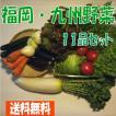 旬菜おすすめセット 10種類(送料無料)福岡産