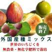 いちじく 無農薬 有機栽培 外国産種mix完熟いちじく 4パック(約2kg)農園直送 送料無料