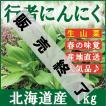 行者ニンニク・北海道産1kg 醤油漬けや餃子に最高♪ 生山菜 ギョウジャニンニク