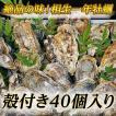 【牡蠣の王様】瀬戸内相生産殻付牡蠣40個入り【お取り寄せ】